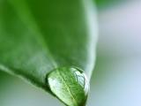 Grön rehabilitering gav positivaeffekter